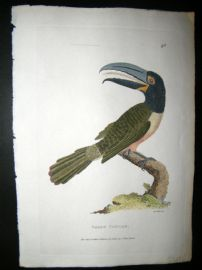Shaw C1800's Antique Hand Col Bird Print. Green Toucan
